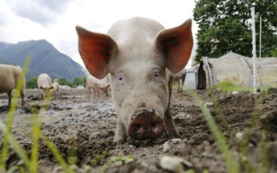 PIGS IN MUD… FEAR AND OTHER MUSINGS.